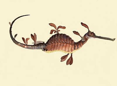 Drawing - Weedy Seadragon. Phyllopteryx Taeniolatus  by William Buelow Gould