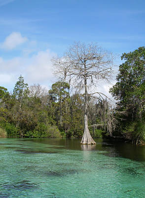 Photograph - Weeki Wachee Springs by Aimee L Maher Photography and Art Visit ALMGallerydotcom