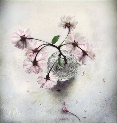 Print featuring the photograph Weeping Cherry Blossoms Still Life by Louise Kumpf
