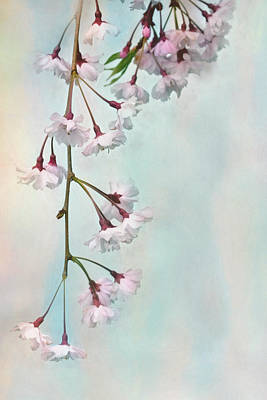 Weeping Cherry Art Print by Lori Deiter