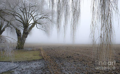 Photograph - Weeping Frozen Willow by Amy Fearn