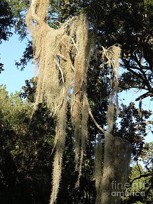 Spanish Moss Photograph - Weeping Tree Vi by Leslie Revels Andrews