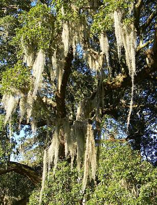 Spanish Moss Photograph - Weeping Tree Vii by Leslie Revels Andrews