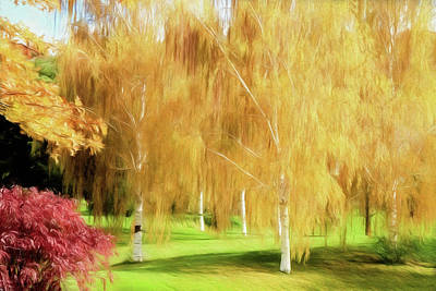 Photograph - Weeping White Birch by Donna Kennedy