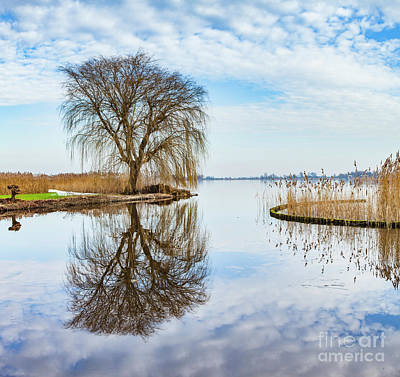 Photograph - Weeping-willow-1 by Casper Cammeraat