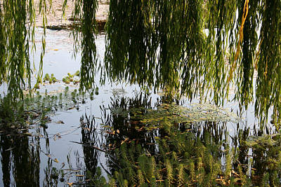 Photograph - Weeping Willow As Above So Below by Holly Ethan