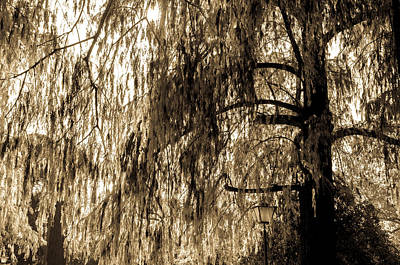 Photograph - Weeping Willow In Sepia Tones by Andrea Mazzocchetti