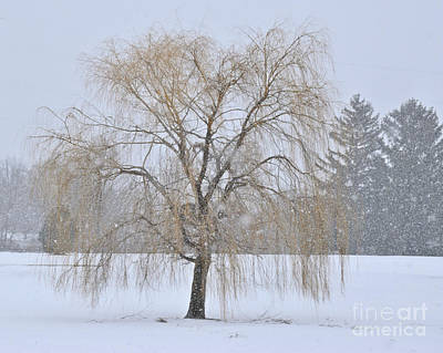 Photograph - Weeping Willow In Snow by Kathy M Krause