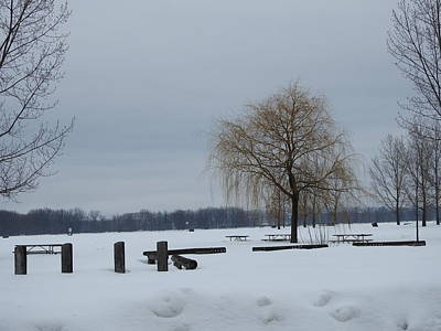 Petrie Island Photograph - Weeping Willow In Winter by Betty-Anne McDonald