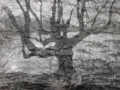 Photograph - Weeping Willow by Kathie Chicoine