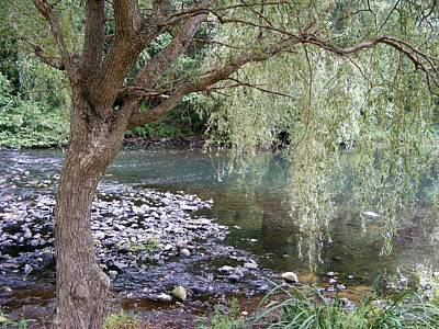 Photograph - Weeping Willow by Margie Avellino