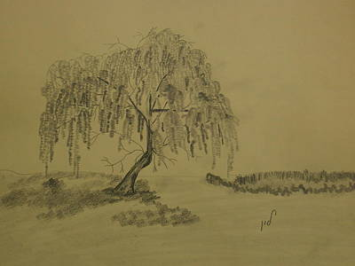 Weeping Drawing - Weeping Willow by Maria Woithofer
