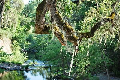 Photograph - Weeping Willow Pond View by Matt Harang