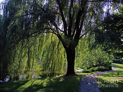 Weeping Willow Resting Place Art Print by Mary Ann Weger