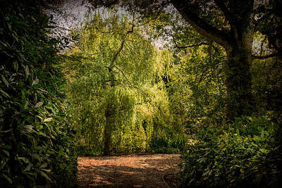 Print featuring the photograph Weeping Willow by Ryan Photography