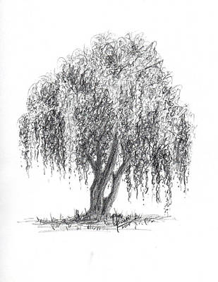 Weeping Drawing - Weeping Willow Tree by Swati Singh