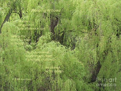 Photograph - Weeping Willows by Ann Horn