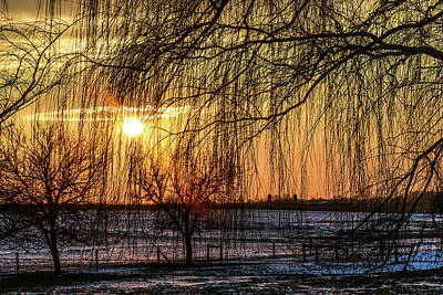 Photograph - Weeping Willows Sunset by Tana Reiff