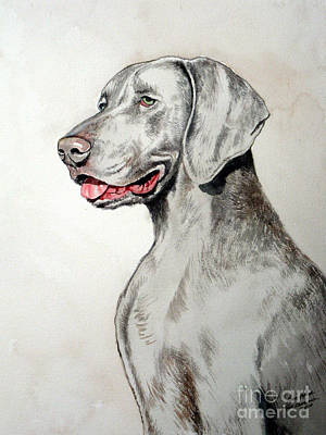 Painting - Weimaraner by Christopher Shellhammer