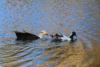 Photograph - Weird Hybrid Ducks by Kathryn Meyer