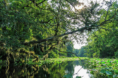 Photograph - Wekiva River Old Growth by Stefan Mazzola