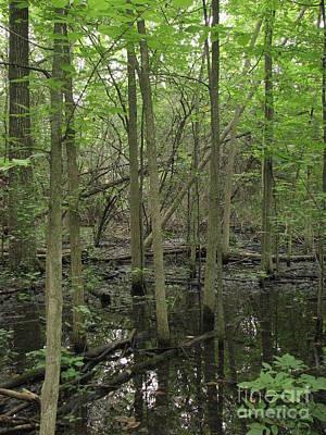 Photograph - Wetlands by Amanda Kessel