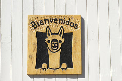 Bienvenido Photograph - Welcom Sign With Guanaco Or Llama by Karen Foley