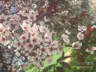 Photograph - Welcome Glorious Spring by Barbara Plattenburg
