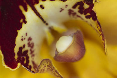 Flower Abstract Photograph - Welcome by Rebecca Cozart
