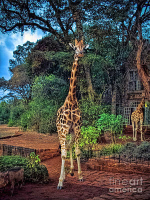 Photograph - Welcome To Giraffe Manor by Karen Lewis