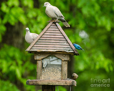 Photograph - Welcome To My Bird Feeder by Donna Brown