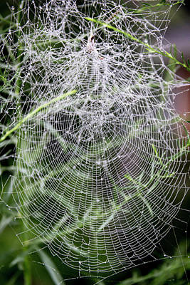 Photograph - Welcome To My Web by Teresa Mucha