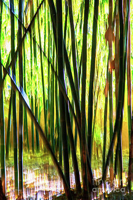 Photograph - Welcome To The Bamboo Jungle by Rene Triay Photography