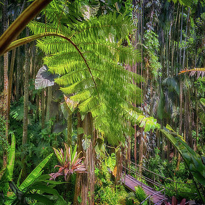Photograph - Welcome To The Jungle 2 by Susan Rissi Tregoning