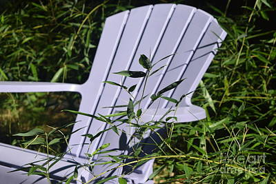 Bamboo Chair Photograph - Welcome To The Jungle by Deborah A Andreas