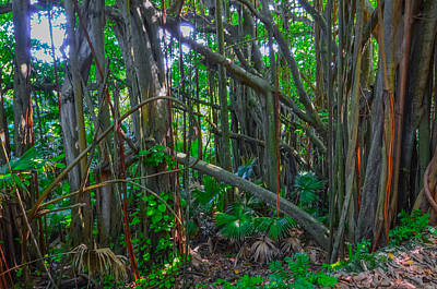 Photograph - Welcome To The Jungle by Jeff at JSJ Photography