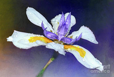 Photograph - Welcoming Iris By Kaye Menner by Kaye Menner