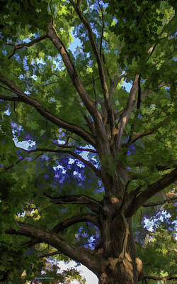 Photograph - Well Seasoned Tree by Roberta Byram