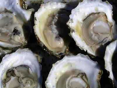 Wellfleet Oysters Art Print