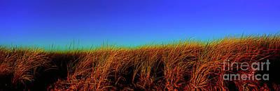 Photograph - Wells Rachel Carson Wildlife Refuge Grass And Dunes by Tom Jelen