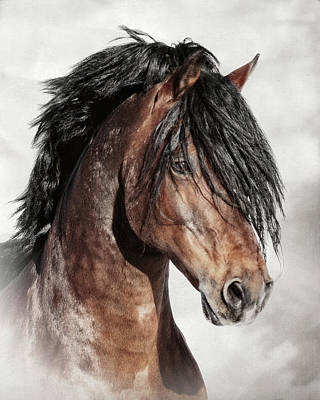 Forelock Photograph - Welsh Cob Portrait D6473 by Wes and Dotty Weber