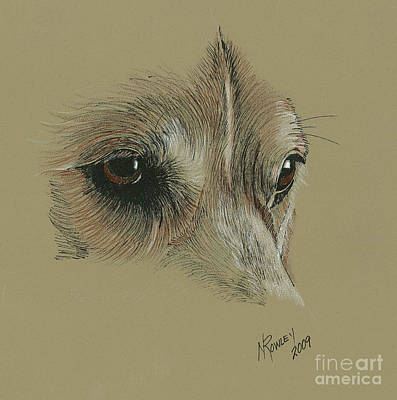 Welsh Corgi Eyes Art Print by Norma Rowley