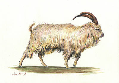 Goat Wall Art - Painting - Welsh Long Hair Mountain Goat by Juan Bosco