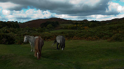 Photograph - Welsh Mountain Pony's  by Lynn Hughes