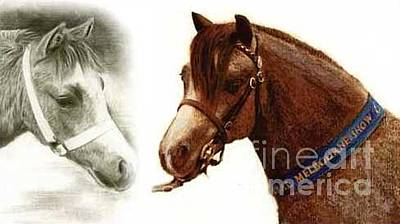 Drawing - Welsh Pony Champions by Ryn Shell
