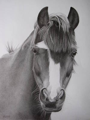 Forelock Drawing - Welsh Pony by Karen Wood