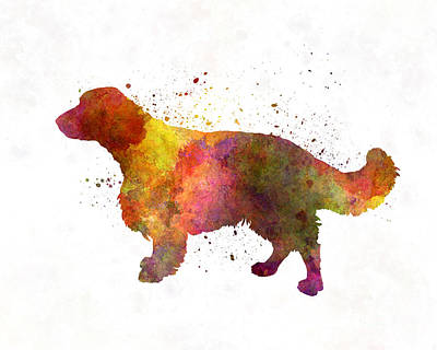 Welsh Springer Spaniel In Watercolor Print by Pablo Romero
