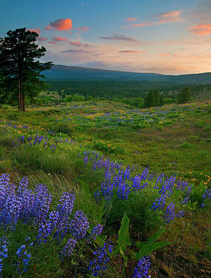 Lupine Photograph - Wenas Valley Sunset by Mike  Dawson