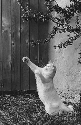 Animal Portraiture Photograph - Were Flying by Lynn Lennon