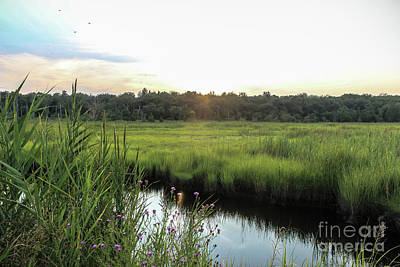 Photograph - West Creek Sunset by Colleen Kammerer